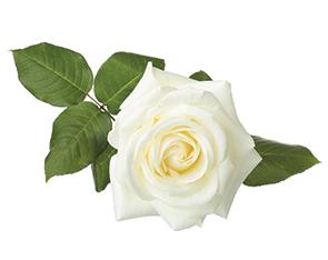 White Rose Liquid Flavour