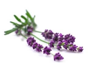 Lavender Liquid Flavour