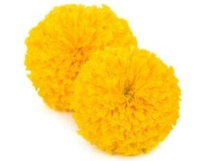 Marigold Liquid Flavour