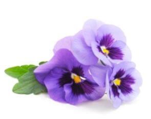 Liquid Violet Flavour